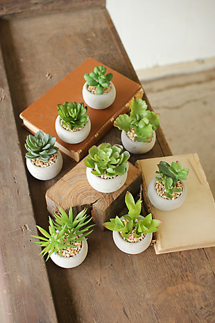 Small Succulents With Round Cement Pot (Set of 8), , large
