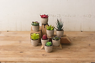 Miniature Succulents (Set of 8), , large