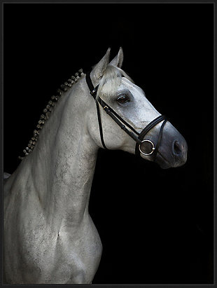 Giclee White Stallion Wall Art, , rollover