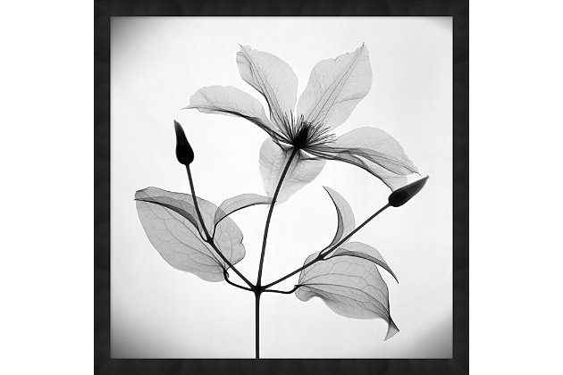 Giclee Clematis Wall Art, , large