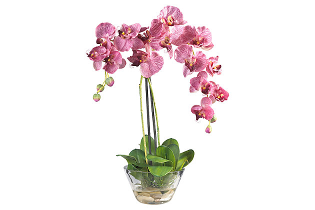 Home Accent Phalaenopsis with Glass Vase, , large