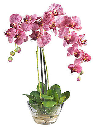Home Accent Phalaenopsis with Glass Vase, , rollover