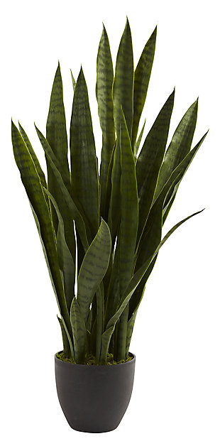 Home Accent Sansevieria with Black Planter, , large
