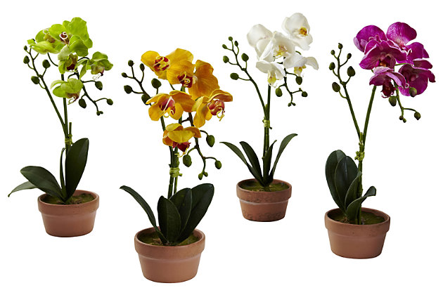 Home Accent Phalaenopsis Orchid with Clay Vase (Set of 4), , large