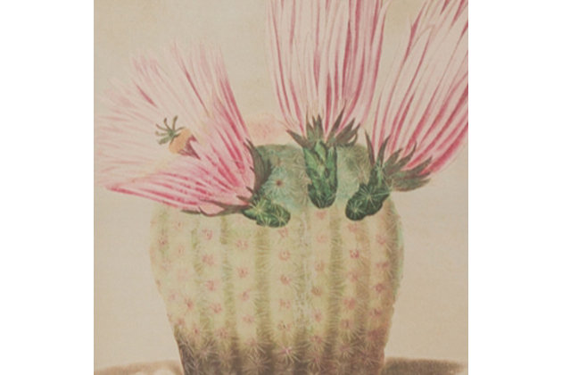 Cactus Flower Wall Art Prints Under Glass (Set of 9), , large