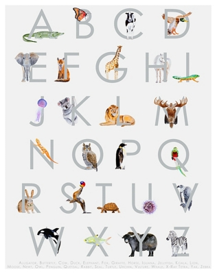 Oopsy Daisy Animal Kingdom ABC's - Gray by Brett Blumenthal Posters That Stick, Gray, large