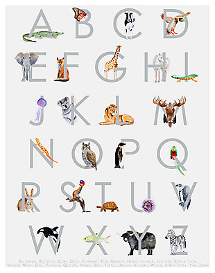 Oopsy Daisy Animal Kingdom ABC's - Gray by Brett Blumenthal Posters That Stick, , rollover