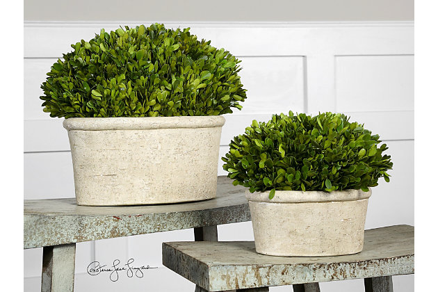 Uttermost  Oval Domes Preserved Boxwood (Set of 2), , large