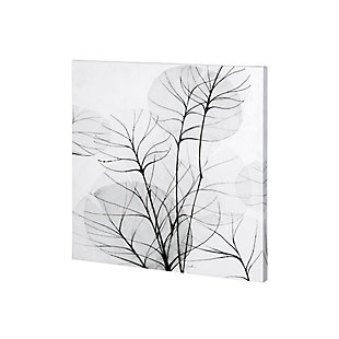 Mercana Branches Illuminated By A Bright Full Moon (30 x 30) Canvas Art, , large
