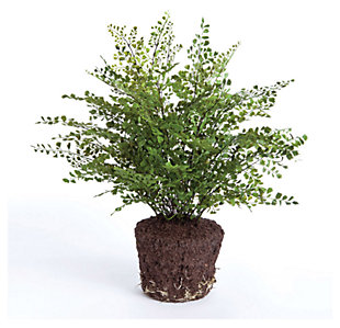 Home Accents Greenery, , large