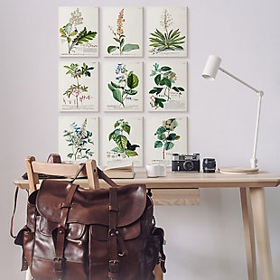 Vintage Botanical Greenery Illustrations 11 x14 Canvas Art (Set of 9), , rollover