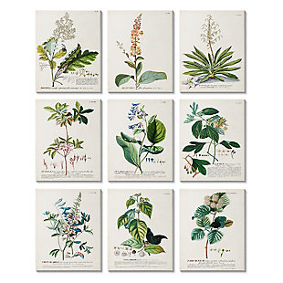Vintage Botanical Greenery Illustrations 11 x14 Canvas Art (Set of 9), , large