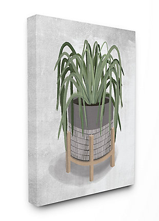 Friendly Spider Plant 24x30 Canvas Wall Art, , large