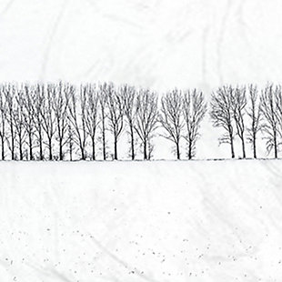 Winter Tree Line Photograph 11x14 Gray Frame Wall Art, White, large