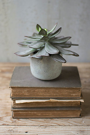 "7"" Succulent with Cement Pot (Box of 4), , rollover"