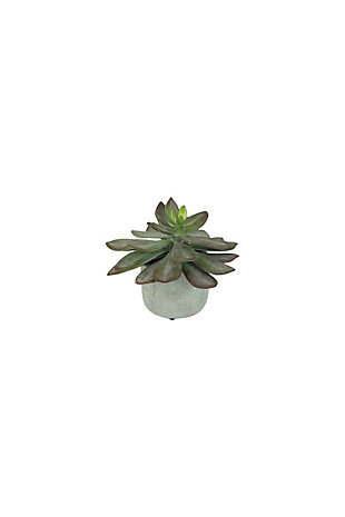 "7"" Succulent with Cement Pot (Box of 4), , large"