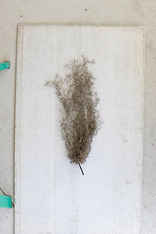 Artificial Gray Moss (Box of 6), , rollover