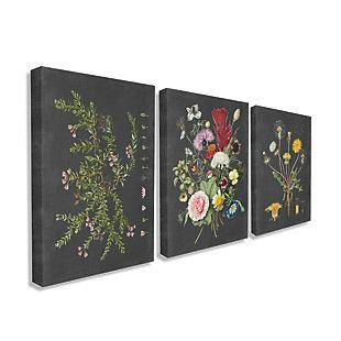 Botanical Chalkboard Flowers Illustrations 3pc 24x30 Canvas Wall Art, Multi, rollover