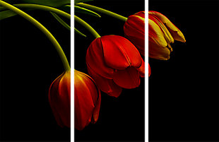 """Red Tulips 48"""" x 72"""" Reverse Printed Acrylic (3 Piece Set), , large"""