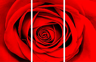 """Red Rose 48"""" x 72"""" Reverse Printed Acrylic (3 Piece Set), , large"""