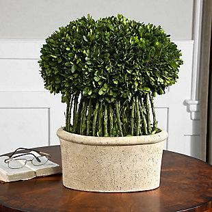 Uttermost Willow Topiary Preserved Boxwood, , rollover