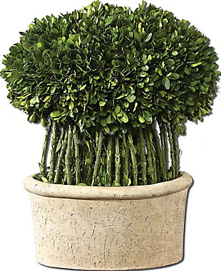 Uttermost Willow Topiary Preserved Boxwood, , large