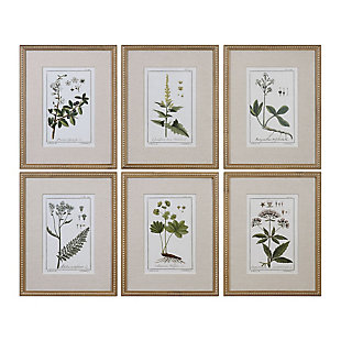 Uttermost Green Floral Botanical Study Prints Set of 6, , large