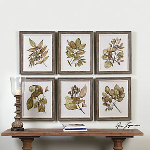 Uttermost Seedlings Framed Prints Set of 6, , rollover