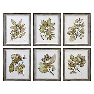 Uttermost Seedlings Framed Prints Set of 6, , large