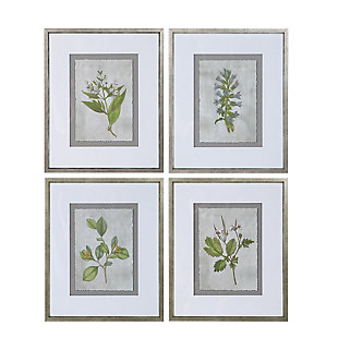 Uttermost Stem Study Framed Prints Set of 4, , large