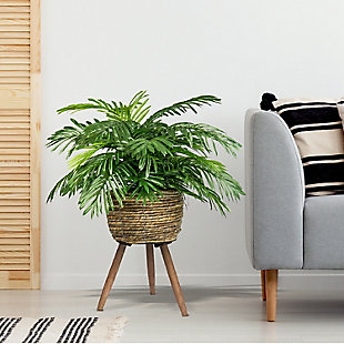 30-inch Phoenix Palm in Deco Basket Stand, , rollover