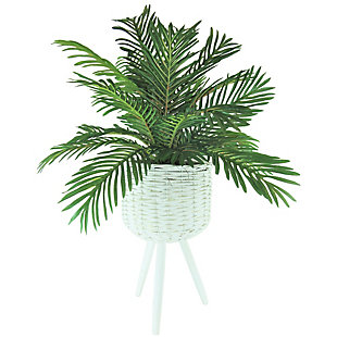 30-inch Phoenix Palm in White Basket Stand, , large