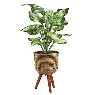 28-inch Hosta in Brown Basket Stand, , large