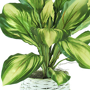 28-inch Hosta in White Basket Stand, , large