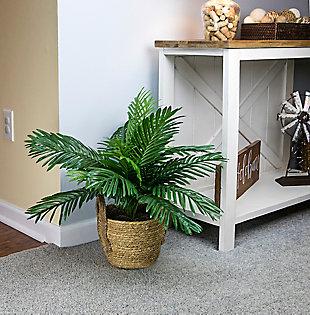 24-inch Phoenix Palm in Boho Basket, , rollover