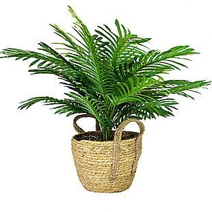 24-inch Phoenix Palm in Boho Basket, , large