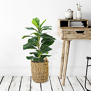 30-inch Fig Plant in a handle basket, , rollover