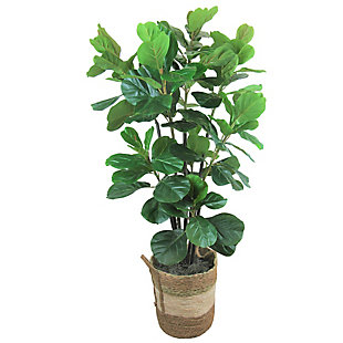 5.6-foot Fiddle Leaf Fig Tree, , large