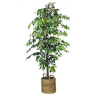 6-foot Ficus Tree in Basket, , large