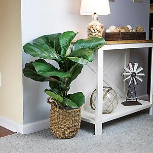 3-foot Fiddle Leaf Fig Plant in Basket, , rollover