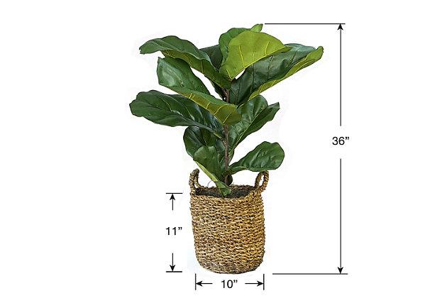 3-foot Fiddle Leaf Fig Plant in Basket, , large