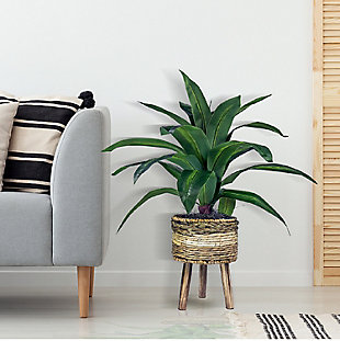 24-inch Dracaena Plant in Tri-Color Basket Stand, , rollover