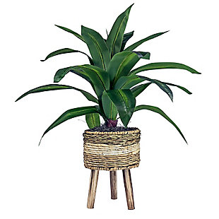 24-inch Dracaena Plant in Tri-Color Basket Stand, , large