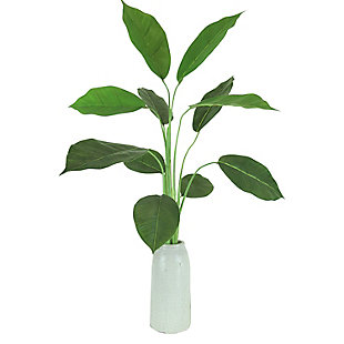 30-inch Rubber Plant in Crackle Cream Vase, , large