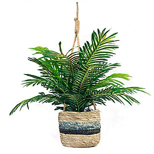 30-inch Phoenix Palm in Hanging Basket, , large