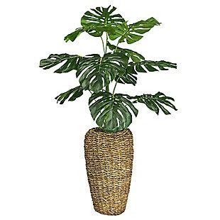 4-foot Monstera in Basket Urn, , large
