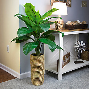 4-foot Spath Plant in Cylinder Basket, , rollover