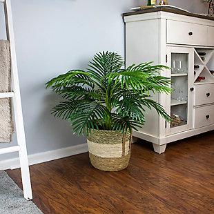 42-inch Palm in Tri-Color Basket, , rollover