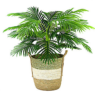 42-inch Palm in Tri-Color Basket, , large