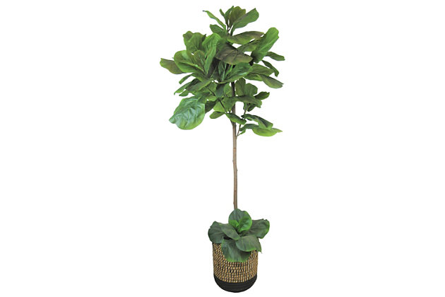 5-foot Fig Tree in Deco Black and Natural Basket, , large